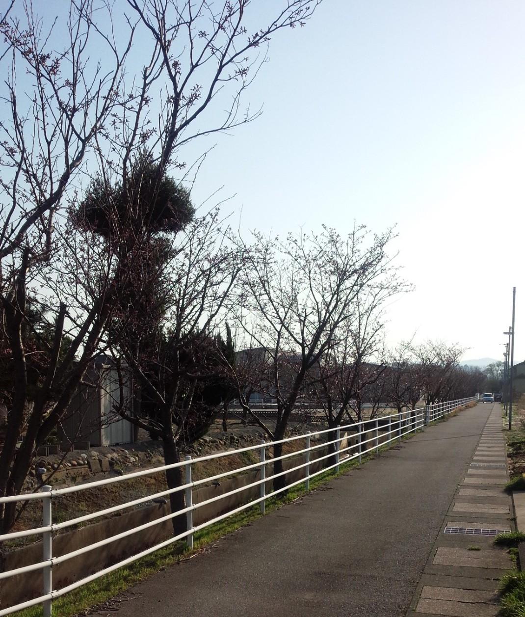 寺井多目的ホール横