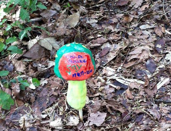 のみの森探索中3